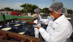 El gobernador Javier Duarte de Ochoa puso en operaciones el Centro de Acopio de Leche Fresca en el municipio de Isla, que dejará un flujo mensual de dos millones de pesos en beneficio de ganaderos de la región.