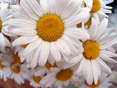 orange and white Orange Sorbet, White Plants, Happy Flowers, Free Images, Natural Beauty, Videos, Wonderland, Daisy, Floral