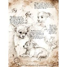 Leonardo's Chihuahua