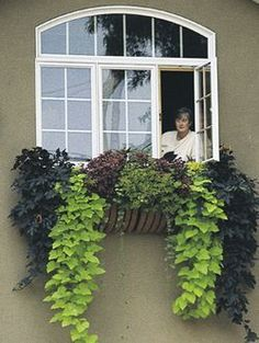 Sweet potato vine + hanging baskets = my mission for this weekend ...