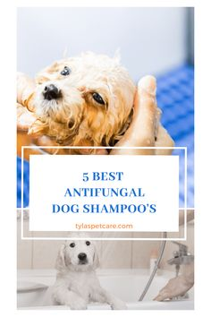 Below are some of the best antifungal dog shampoos to treat these conditions. Dog Dental Care, Pet Care, Medicated Dog Shampoo, Signs Of Inflammation, Dry Flaky Skin, Diy Shampoo, Bacterial Infection, Kittens And Puppies, Pet Grooming