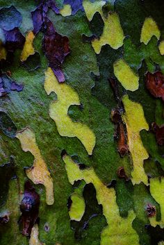 Tree bark, New Haven, CT by Edwaste,