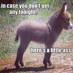In case you don't get any tonight... Here's a little ass!