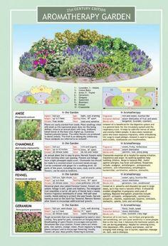 Aromatherapy Garden infograph