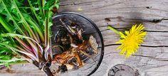 Top 25 Health Benefits of Dandelion Root Extract