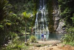 Nouvelle-Zélande - Auckland - Excursion Auckland, forêt tropicale et côte sauvage © Chris Sisarich, New Zealand Tourism