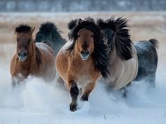 The year of the Horse year is about freedom, returning to nature, and enjoying life and life's adventures!