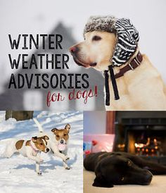 Aside from the obvious - keeping your dog inside where it's warm - remember these tips for keeping your furriest family members healthy and happy through the frigid winter months.