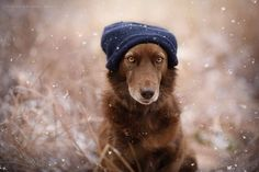 Expressive Dog Portraits Capture the Soulful Essence of Man's Best Friend