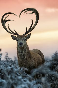 ⭐Heart Shaped Antlers⭐ by Max Ellis