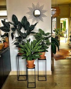 58 DIY Plant Stand ideas to Fill Your Living Room With Green.- 58 DIY Plant Stand ideas to Fill Your Living Room With Greenery living room decoration, plant stand decor, greenery decoration, plants indoor living room - Plantas Indoor, House Plants Decor, Living Room Decor With Plants, Home Plants, Indoor Plant Decor, Interior Plants, Living Rooms, Indoor Plant Stands, Big Indoor Plants