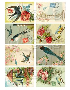 Belle sfondi Birdies ATC Collage foglio stampabile Download