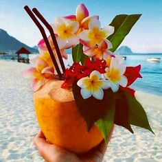 """LINDSEY BROWN RESORTWEAR ✨ az Instagramon: """"Our Recipe for a Papaya & Coconut Cocktail you will need . Sunshine . A beach in paradise"""""""