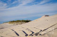 Tracks in the Sand Dunes by Debra Martz  http://debramartz.com/featured/tracks-in-the-sand-dunes-debra-martz.html