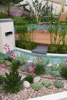 Cascada en el jardín acuático moderno con camas altas, cubierta de madera circular, paredes blancas, perennes, flores, paisajismo para un look clásico limpio con plantas suculentas para el agua-sabio siembra
