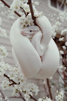 - Belezza,animales , salud animal y mas Les Reptiles, Cute Reptiles, Reptiles And Amphibians, Pretty Snakes, Beautiful Snakes, Snake Wallpaper, Animal Wallpaper, Wallpaper Wallpapers, Cute Little Animals
