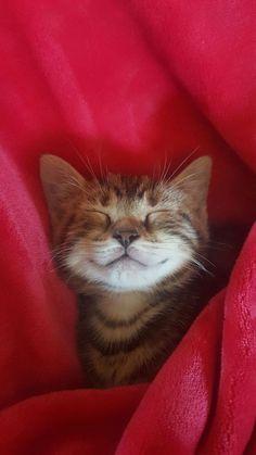 Smile! @yummypets #fripouille #domesticshorthaired