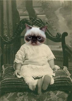 Hey, j'ai trouvé ce super article sur Etsy, chez http://www.etsy.com/fr/listing/85140182/zack-vintage-cat-5x7-print