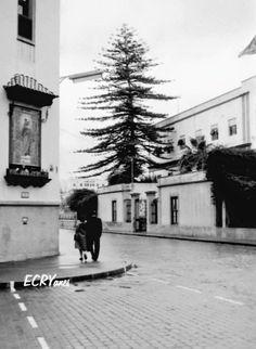 Antigua esquina del colegio de los Salesianos, frente al estropeado hospital militar. Tenerife, Photography, Outdoor, Santa Cruz, Canary Islands, Antique Photos, Palmas, Past Tense, Earth