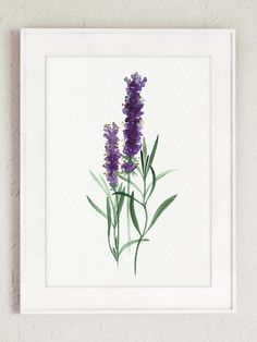 Sage Art print Lavender Watercolor Painting by ColorWatercolor
