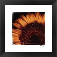 John Jones 'Beautiful Burst' Framed Print Art