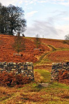 Autumn, Leicestershire, England  photo via michelle
