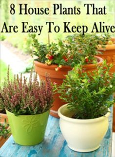 Are you a serial plant killer?  Do you routinely forget to water your houseplants?  Does your apartment face the north and get little light?  Do you travel a lot and just can't give plants the daily care they need?  If you fall into any of those categories, then this article may help you-8 House Plants That Are Easy To Keep Alive