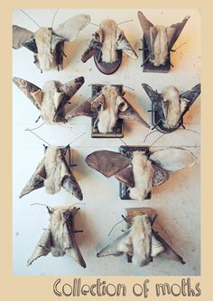 Mr Finch's fabulous moths