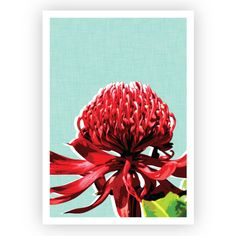 Enjoy the wonders of our Australian flora with this bold Waratah wall art print, with a slight linen-look textured background to add depth and contrast. The perfect addition to any Australian home! Canvas Art Prints, Framed Prints, Create Your Own World, Kitchen Artwork, Garden Wall Art, Modern Prints, Textured Background, Home Art, Hand Lettering