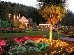 Shore Acres Holidays - SEVEN THINGS YOU WANT TO DO IN CHARLESTON OREGON THIS HOLIDAY SEASON