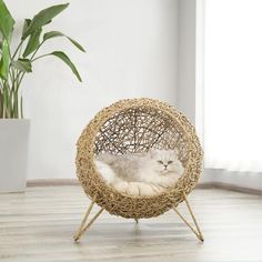 Wholesale Cat House Rattan Woven Summer General Cat Climbing Frame Cat House Cat Bed Cat House Woven Cat House Pet Products from Our website with high quality and fast shipping worldwide. Animal Room, Puppy Beds, Pet Beds, Beds For Cats, Cheap Cat Beds, Diy Cat Bed, Dog Sofa Bed, Cat Room, Pet Furniture