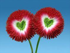 Amor en la naturaleza...