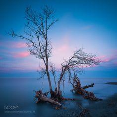 #nature .. by Rizvan