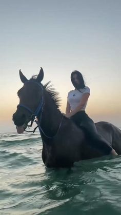 Kathiyawadi Horse, Horse Girl, Horse Riding, Cute Horses, Beautiful Horses, Moving Pictures Gif, Instagram Profile Picture Ideas, Beautiful Rose Flowers, Cute Animal Photos