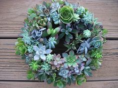 For your gardening buddy. A drool worthy succulent wreath. Succulent Centerpieces, Succulent Wreath, Succulent Arrangements, Cacti And Succulents, Planting Succulents, Centerpiece Wedding, Wedding Favors, Winter Wedding Flowers, Rustic Wedding Flowers
