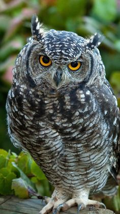 owl, predator, grass, leaves, bird