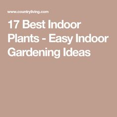 17 Best Indoor Plants - Easy Indoor Gardening Ideas
