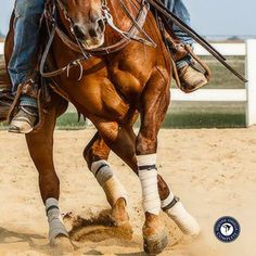 """""""Since starting my horses on Equine Omega Complete they just look better overall. Their hair coats are beautiful, the 3 year olds and show horses that are working hard are healthier and stay sound through the work and travel. Even with intense work, showing or hauling, the horses are holding their weight, are less stressed and more able to focus on the task. We love Equine Omega Complete and would recommend it to everyone!"""" Russ Carroll Performance Horses. Want FREE shipping? Ask us how."""