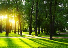 Tree Fertilization - Scapes Incorporatedhttp://www.scapesincorporated.com/services/tree-care-and-services/tree-fertilization/