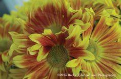 Gaillardia Flowers Fine Art  Photo Print by BeckyTylerArt on Etsy, $20.00
