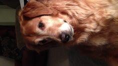 Bailey the crazy dog