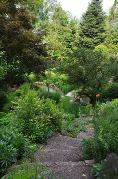 landscaping on a slope and dealing with an abundance of shade in this garden, stairs