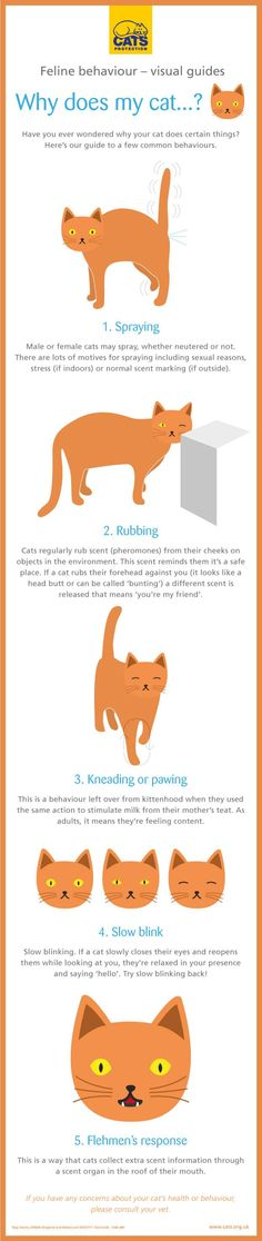 If you've ever wondered why your cat does certain things have a read of our guide to some common cat behaviours.