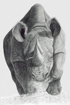 Rhino - A charging Rhino is depicted in it's full detail in this graphite image. Artwork by Mal Luber. See his full collection at impactartsweb.com