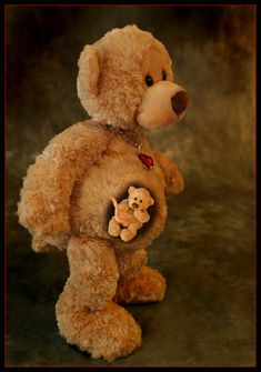 teddypregnant600.jpg