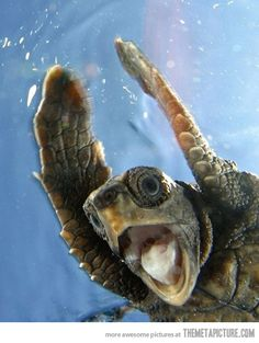 ~Sea turtle :D This reminds me of the turtle in my dream swimming in his shell . . . This makes me happy!
