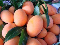 Plum Mango, Mangifera Indica, Tropical Caribbean Mango