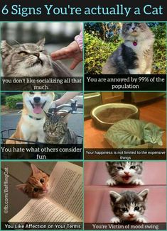 6 Signs You're Actually A Cat #funny #meme  Oh Lord, I AM a cat! Which is kinda dangerous since I have 5 dogs....