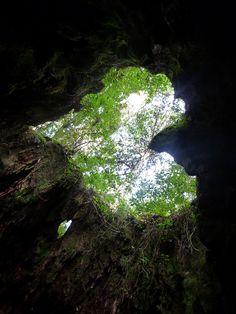 Heart shape at Wilson's Stump in Yakushima Kagoshima ,Japan