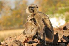 Mommy and child monkeys, plus other wildlife of India